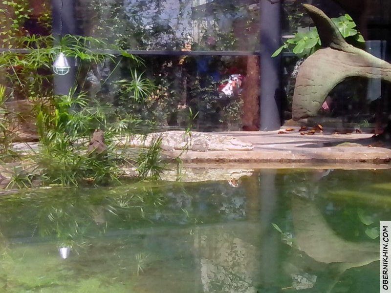 кракодил отдыхает