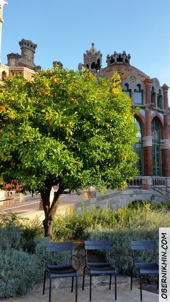 мандариновое дерево на территории