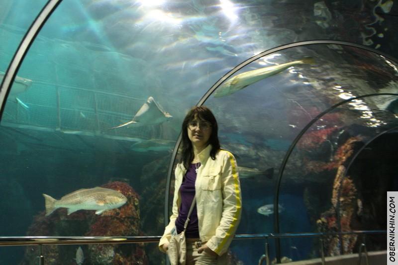 В самом длинном тоннеле в Европе в океанариумах.
